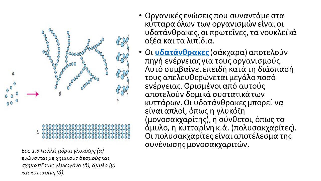Οργανικές ενώσεις που συναντάμε στα κύτταρα όλων των οργανισμών είναι οι υδατάνθρακες, οι πρωτεΐνες, τα νουκλεϊκά οξέα και τα λιπίδια.