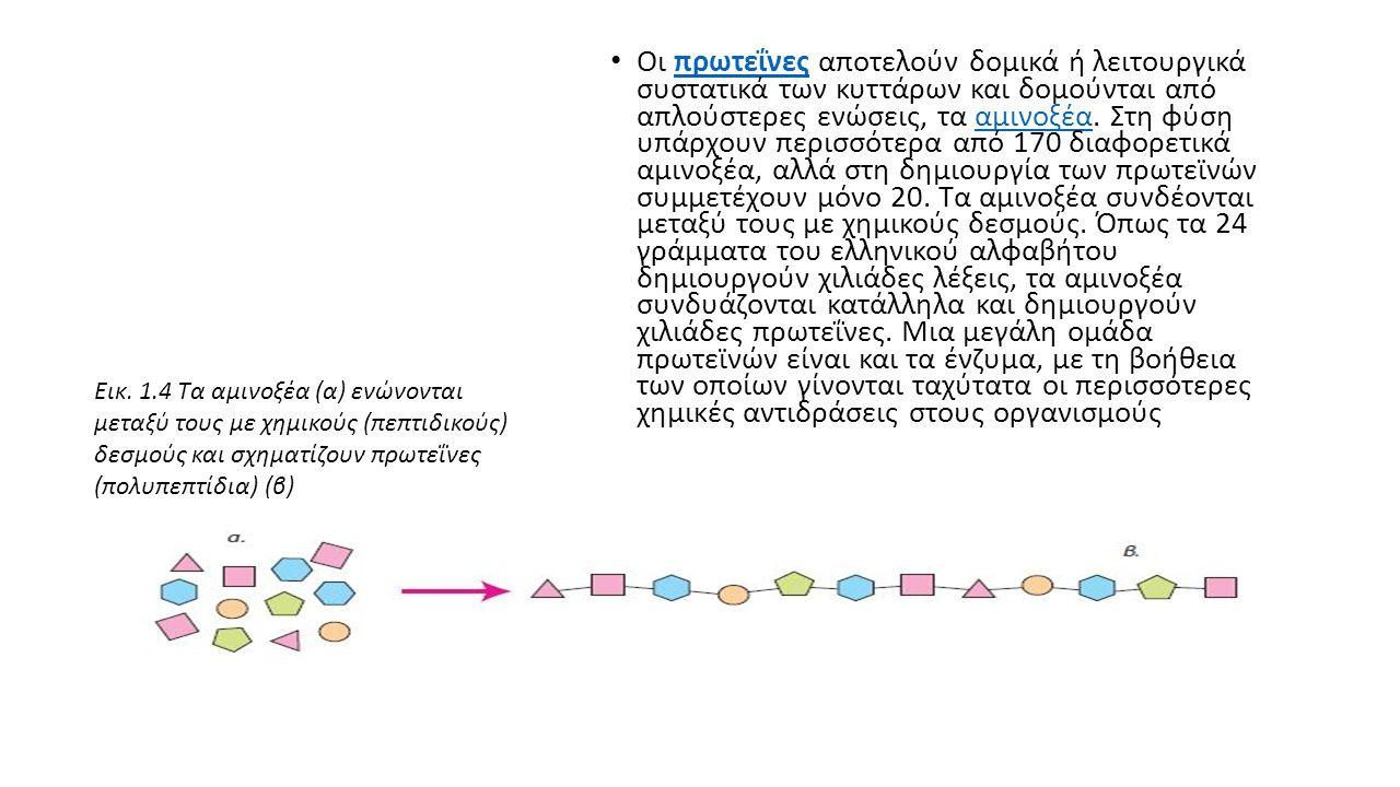 Οι πρωτεΐνες αποτελούν δομικά ή λειτουργικά συστατικά των κυττάρων και δομούνται από απλούστερες ενώσεις, τα αμινοξέα.