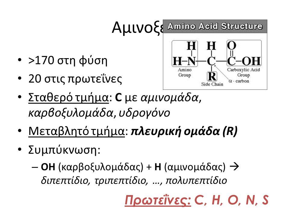 Αμινοξέα >170 στη φύση 20 στις πρωτεΐνες Σταθερό τμήμα: C με αμινομάδα, καρβοξυλομάδα, υδρογόνο Μεταβλητό τμήμα: πλευρική ομάδα (R) Συμπύκνωση: – ΟΗ (