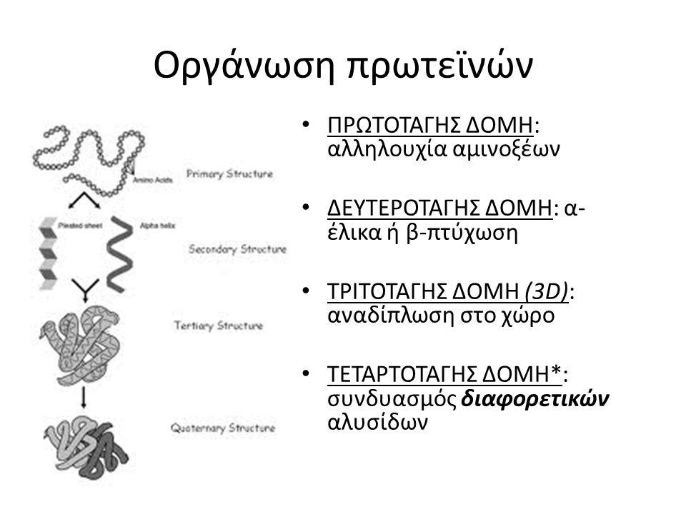 Οργάνωση πρωτεϊνών ΠΡΩΤΟΤΑΓΗΣ ΔΟΜΗ: αλληλουχία αμινοξέων ΔΕΥΤΕΡΟΤΑΓΗΣ ΔΟΜΗ: α- έλικα ή β-πτύχωση ΤΡΙΤΟΤΑΓΗΣ ΔΟΜΗ (3D): αναδίπλωση στο χώρο ΤΕΤΑΡΤΟΤΑΓΗ