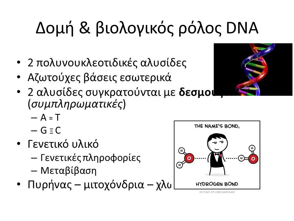 Δομή & βιολογικός ρόλος DNA 2 πολυνουκλεοτιδικές αλυσίδες Αζωτούχες βάσεις εσωτερικά 2 αλυσίδες συγκρατούνται με δεσμούς H (συμπληρωματικές) – A = T –