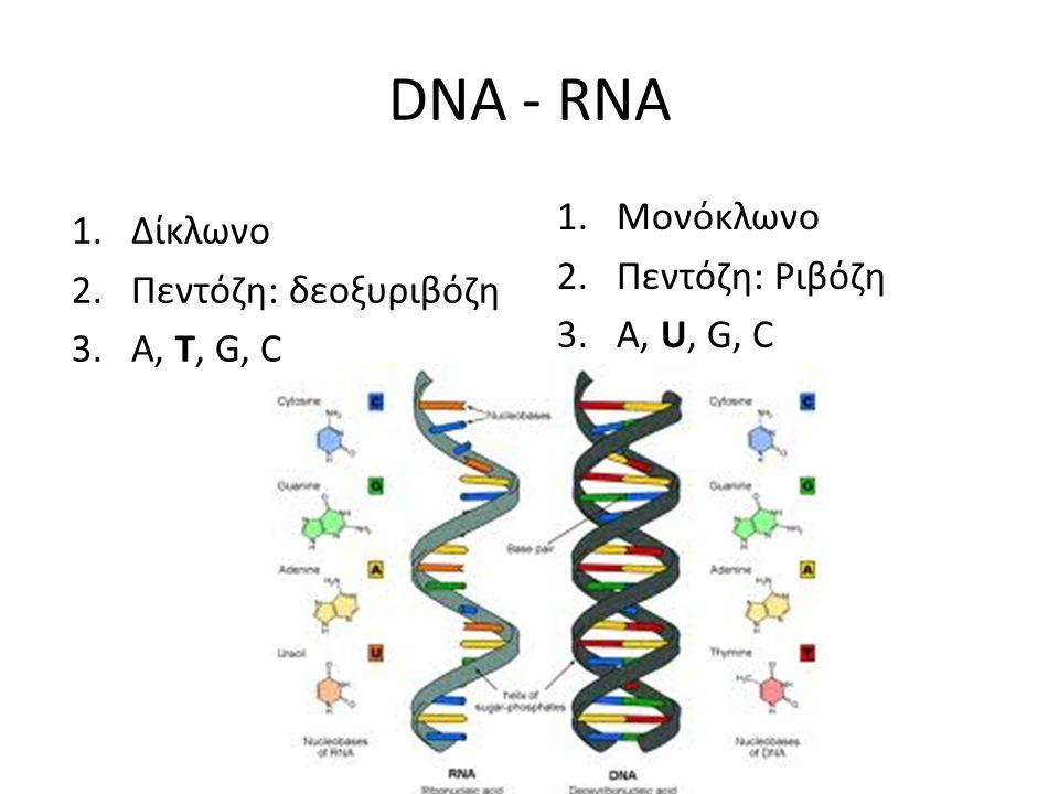 DNA - RNA 1.Δίκλωνο 2.Πεντόζη: δεοξυριβόζη 3.A, T, G, C 1.Μονόκλωνο 2.Πεντόζη: Ριβόζη 3.A, U, G, C