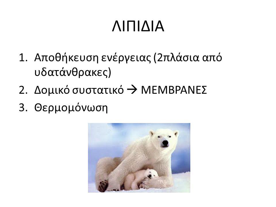ΛΙΠΙΔΙΑ 1.Αποθήκευση ενέργειας (2πλάσια από υδατάνθρακες) 2.Δομικό συστατικό  ΜΕΜΒΡΑΝΕΣ 3.Θερμομόνωση