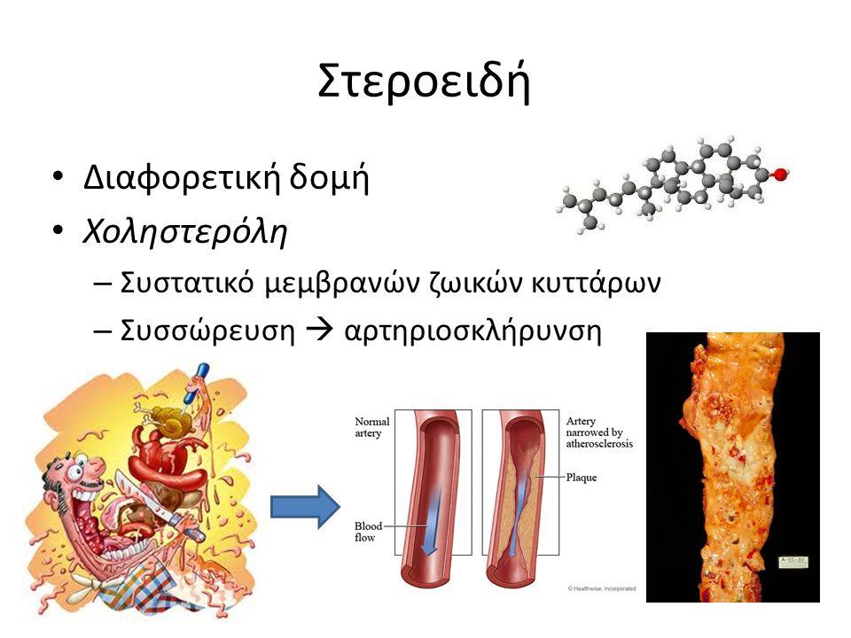 Στεροειδή Διαφορετική δομή Χοληστερόλη – Συστατικό μεμβρανών ζωικών κυττάρων – Συσσώρευση  αρτηριοσκλήρυνση