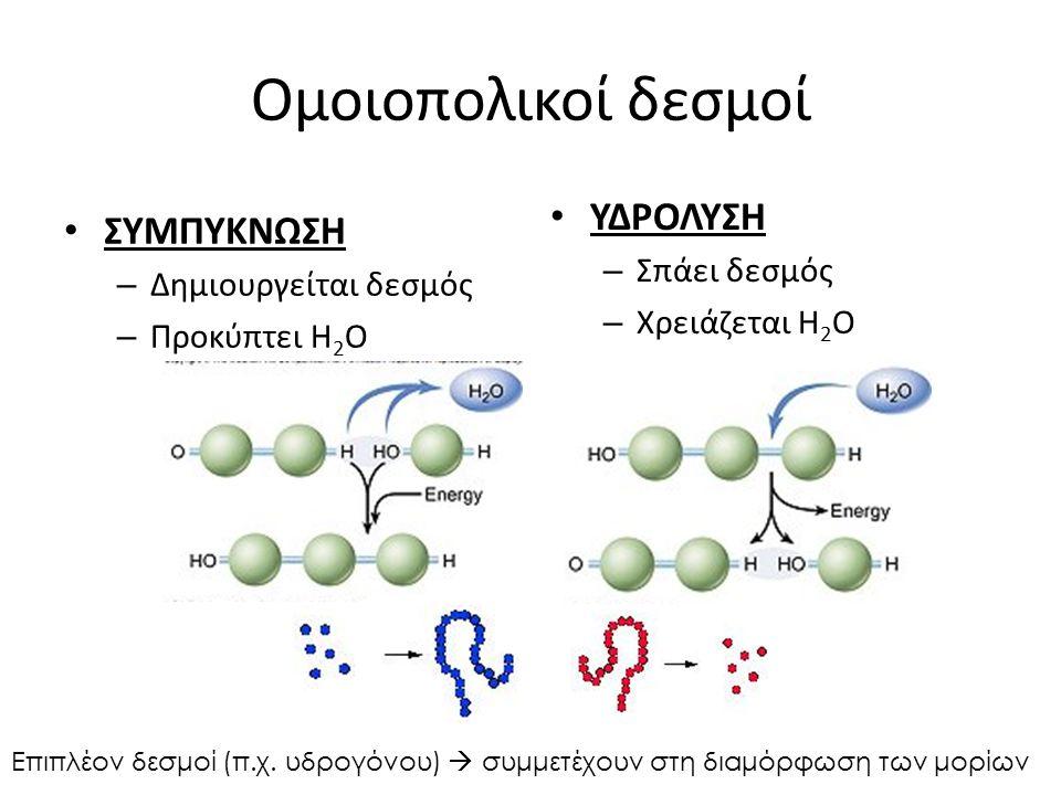 Ομοιοπολικοί δεσμοί ΣΥΜΠΥΚΝΩΣΗ – Δημιουργείται δεσμός – Προκύπτει H 2 O ΥΔΡΟΛΥΣΗ – Σπάει δεσμός – Χρειάζεται H 2 O Επιπλέον δεσμοί (π.χ. υδρογόνου) 