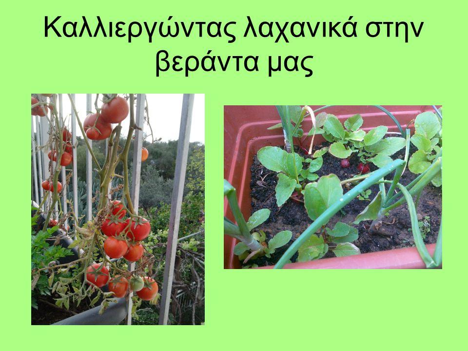Καλλιεργώντας λαχανικά στην βεράντα μας