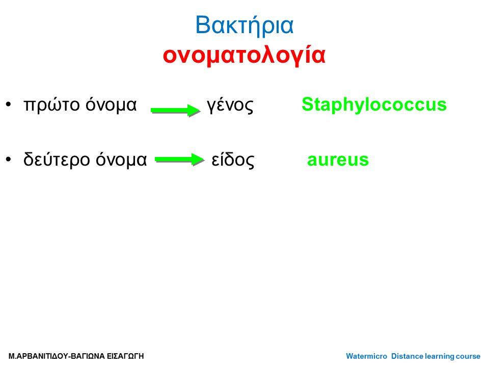 πρώτο όνομα γένος Staphylococcus δεύτερο όνομα είδος aureus Βακτήρια ονοματολογία