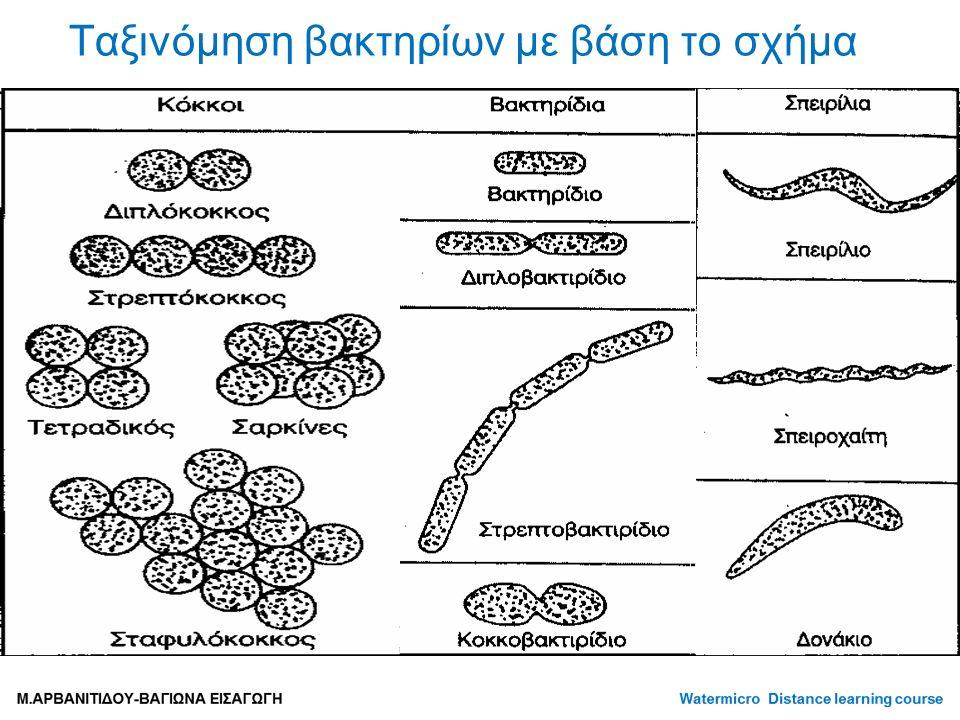 Ταξινόμηση βακτηρίων με βάση το σχήμα