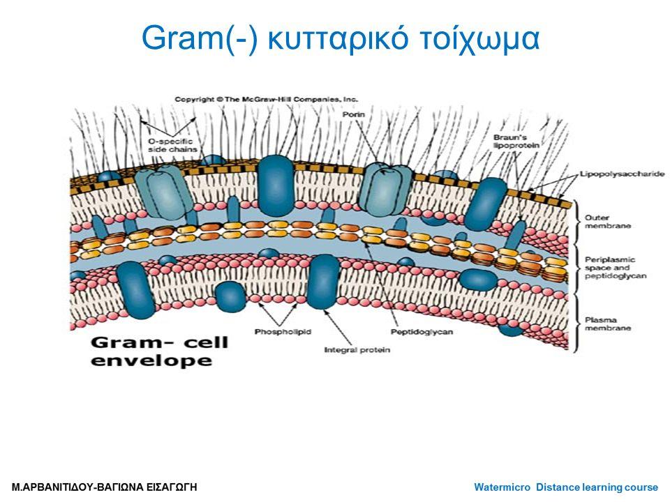 Gram(-) κυτταρικό τοίχωμα