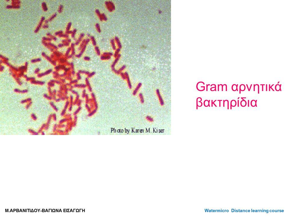 Gram αρνητικά βακτηρίδια
