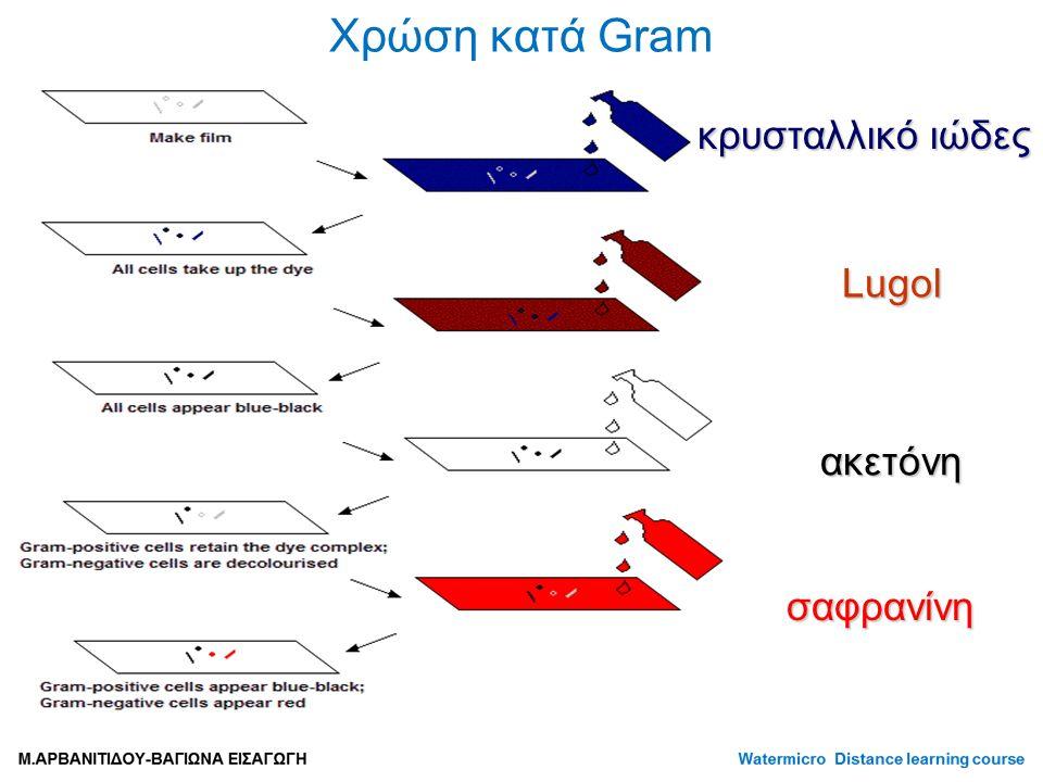 Χρώση κατά Gram κρυσταλλικό ιώδες Lugol ακετόνη σαφρανίνη