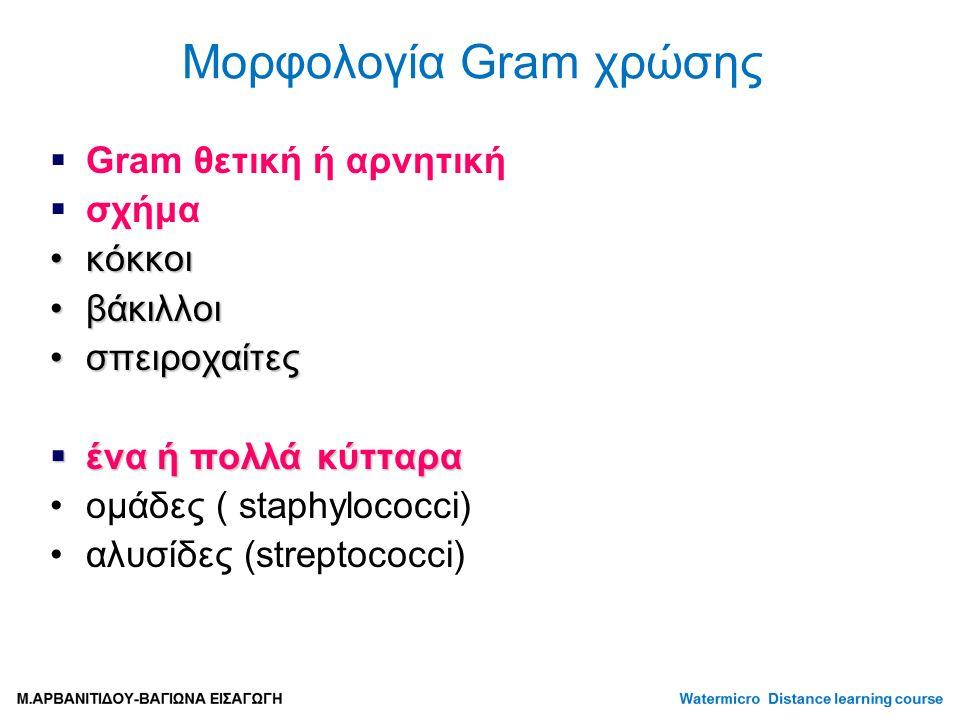 Μορφολογία Gram χρώσης  Gram θετική ή αρνητική  σχήμα κόκκοικόκκοι βάκιλλοιβάκιλλοι σπειροχαίτεςσπειροχαίτες  ένα ή πολλά κύτταρα ομάδες ( staphylococci) αλυσίδες (streptococci)