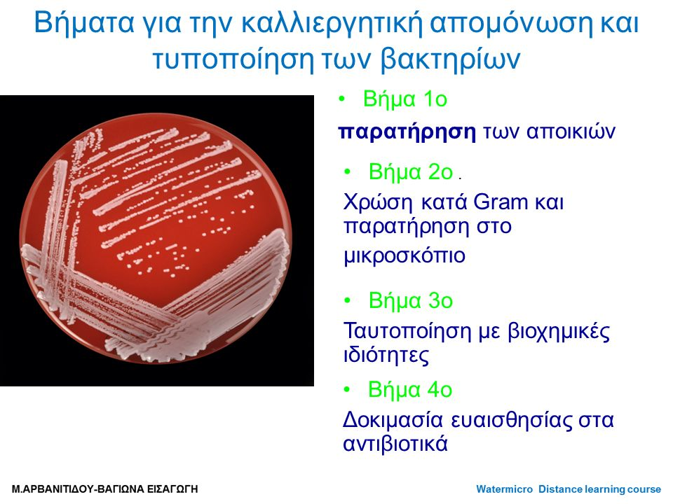 Βήματα για την καλλιεργητική απομόνωση και τυποποίηση των βακτηρίων Βήμα 1ο παρατήρηση των αποικιών Βήμα 2ο.