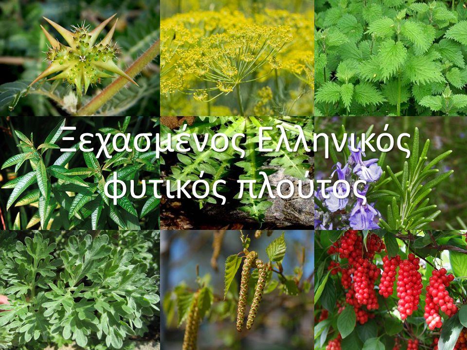 Ξεχασμένος Ελληνικός φυτικός πλούτος