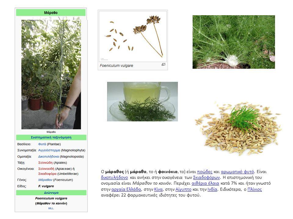 Ο μάραθος (ή μάραθο, το ή φοινόκιο, το) είναι ποώδες και αρωματικό φυτό.