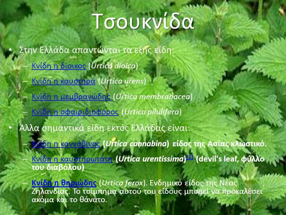 Τσουκνίδα Στην Ελλάδα απαντώνται τα εξής είδη: – Κνίδη η δίοικος (Urtica dioica) Κνίδη η δίοικος – Κνίδη η καυστηρά (Urtica urens) Κνίδη η καυστηρά – Κνίδη η μεμβρανώδης (Urtica membranacea) Κνίδη η μεμβρανώδης – Κνίδη η σφαιριδιοφόρος (Urtica pilulifera) Κνίδη η σφαιριδιοφόρος Άλλα σημαντικά είδη εκτός Ελλάδας είναι: – Κνίδη η καννάβινος (Urtica cannabina) είδος της Ασίας κλωστικό.