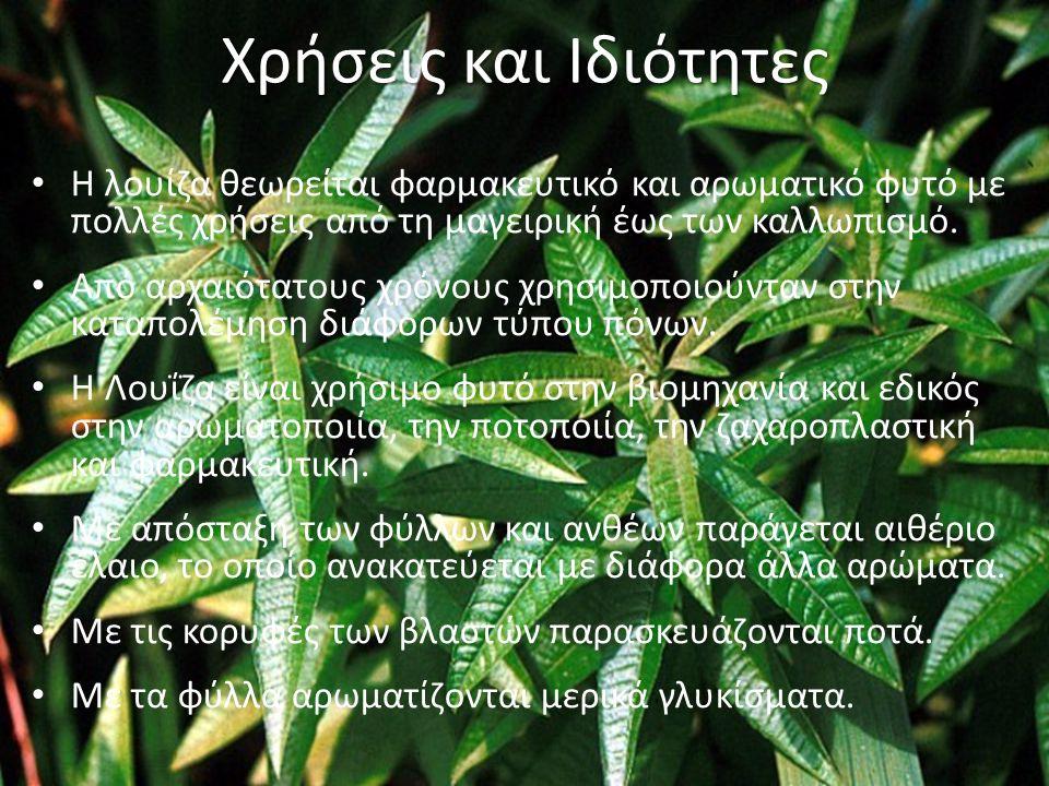 Χρήσεις και Ιδιότητες Η λουίζα θεωρείται φαρμακευτικό και αρωματικό φυτό με πολλές χρήσεις από τη μαγειρική έως των καλλωπισμό.