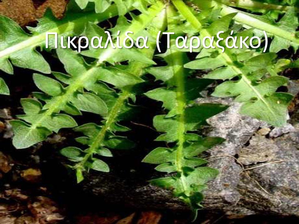 Πικραλίδα (Ταραξάκο)