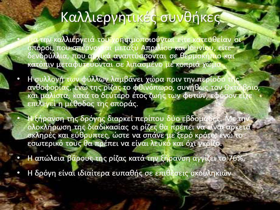 Καλλιεργητικές συνθήκες Για την καλλιέργειά του χρησιμοποιούνται είτε κατευθείαν οι σπόροι, που σπέρνονται μεταξύ Απριλίου και Ιουνίου, είτε δενδρύλλια, που αρχικά αναπτύσσονται σε θερμοκήπιο και κατόπιν μεταφυτεύονται σε λιπασμένο με κοπριά χώμα.