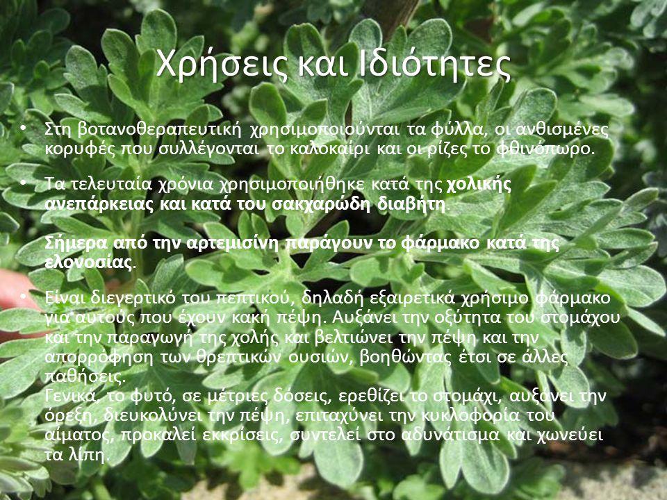 Χρήσεις και Ιδιότητες Στη βοτανοθεραπευτική χρησιμοποιούνται τα φύλλα, οι ανθισμένες κορυφές που συλλέγονται το καλοκαίρι και οι ρίζες το φθινόπωρο.