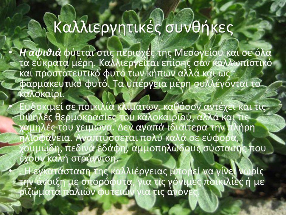 Καλλιεργητικές συνθήκες Η αψιθιά φύεται στις περιοχές της Μεσογείου και σε όλα τα εύκρατα μέρη.