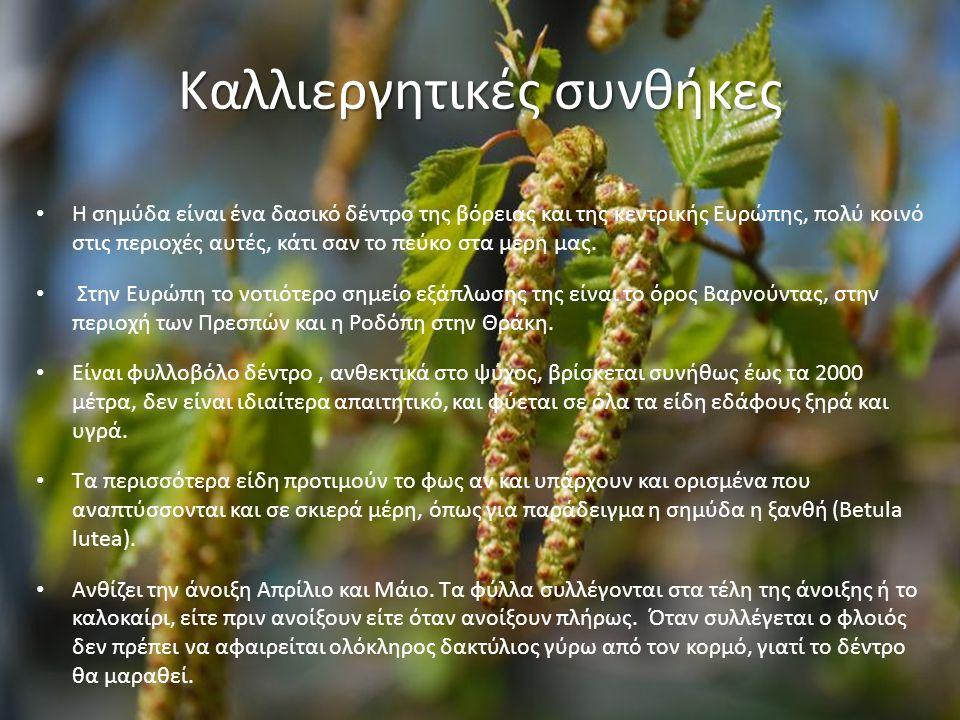 Καλλιεργητικές συνθήκες Η σημύδα είναι ένα δασικό δέντρο της βόρειας και της κεντρικής Ευρώπης, πολύ κοινό στις περιοχές αυτές, κάτι σαν το πεύκο στα μέρη μας.