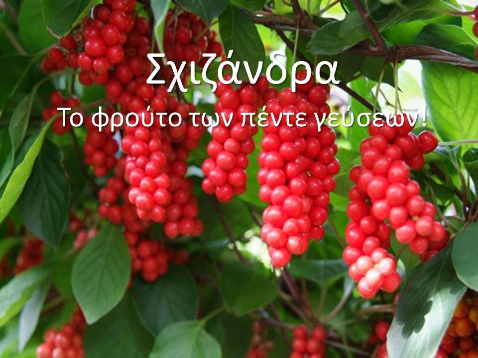 Σχιζάνδρα Το φρούτο των πέντε γεύσεων !