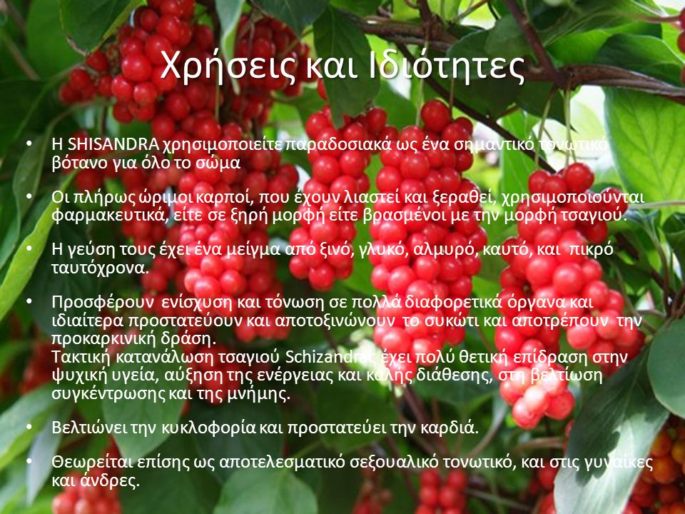 Χρήσεις και Ιδιότητες Η SHISANDRA χρησιμοποιείτε παραδοσιακά ως ένα σημαντικό τονωτικό βότανο για όλο το σώμα Οι πλήρως ώριμοι καρποί, που έχουν λιαστεί και ξεραθεί, χρησιμοποιούνται φαρμακευτικά, είτε σε ξηρή μορφή είτε βρασμένοι με την μορφή τσαγιού.