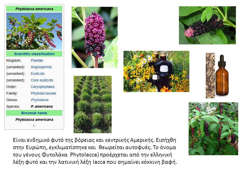 Είναι ενδημικό φυτό της βόρειας και κεντρικής Αμερικής.