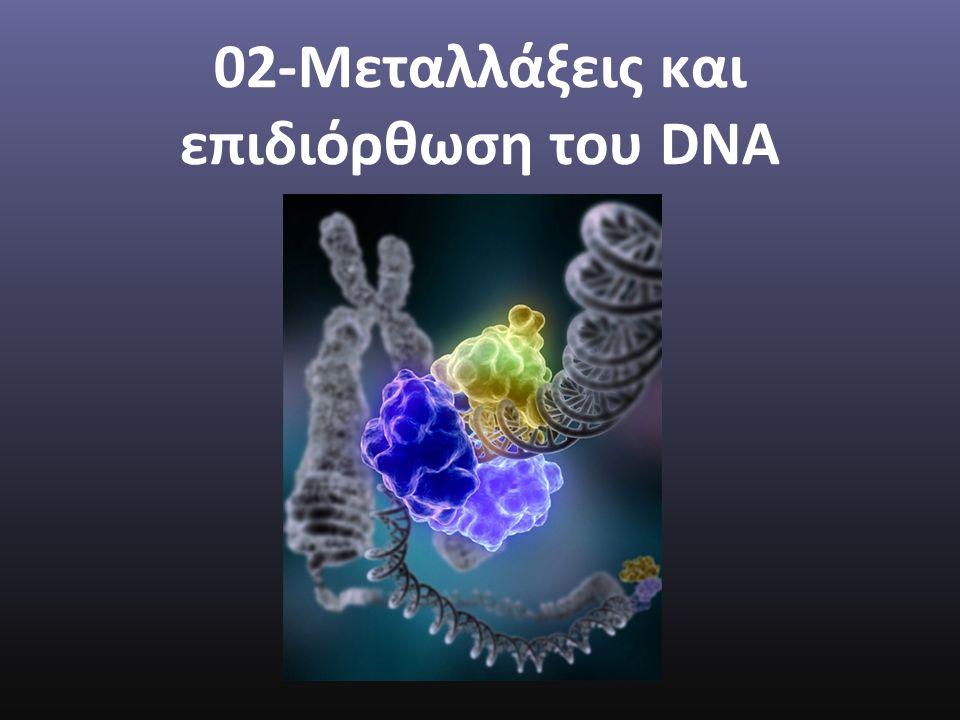 02-Μεταλλάξεις και επιδιόρθωση του DNA