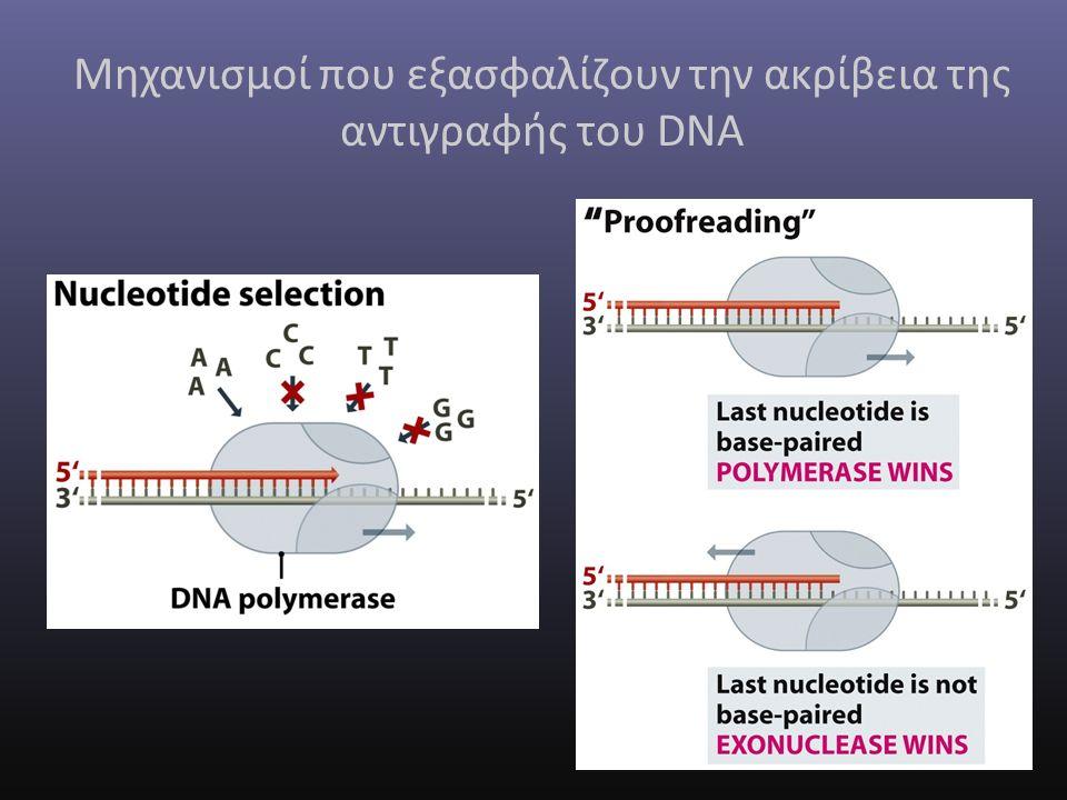 Μηχανισμοί που εξασφαλίζουν την ακρίβεια της αντιγραφής του DNA