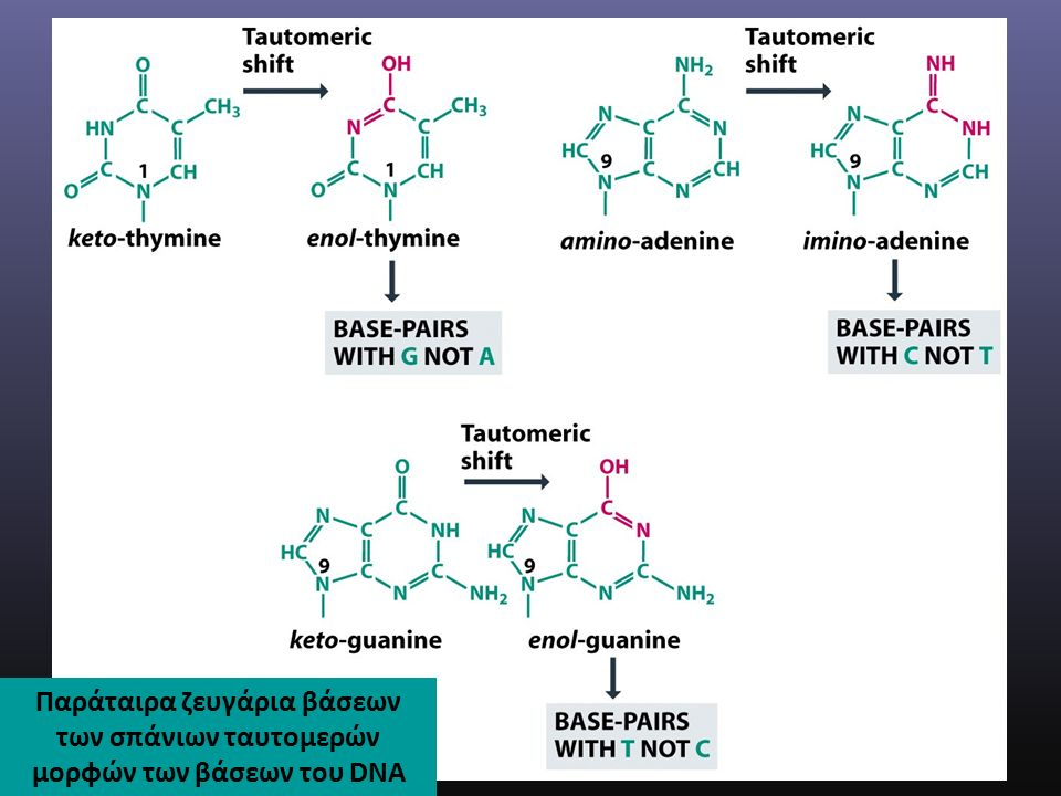 Παράταιρα ζευγάρια βάσεων των σπάνιων ταυτομερών μορφών των βάσεων του DNA
