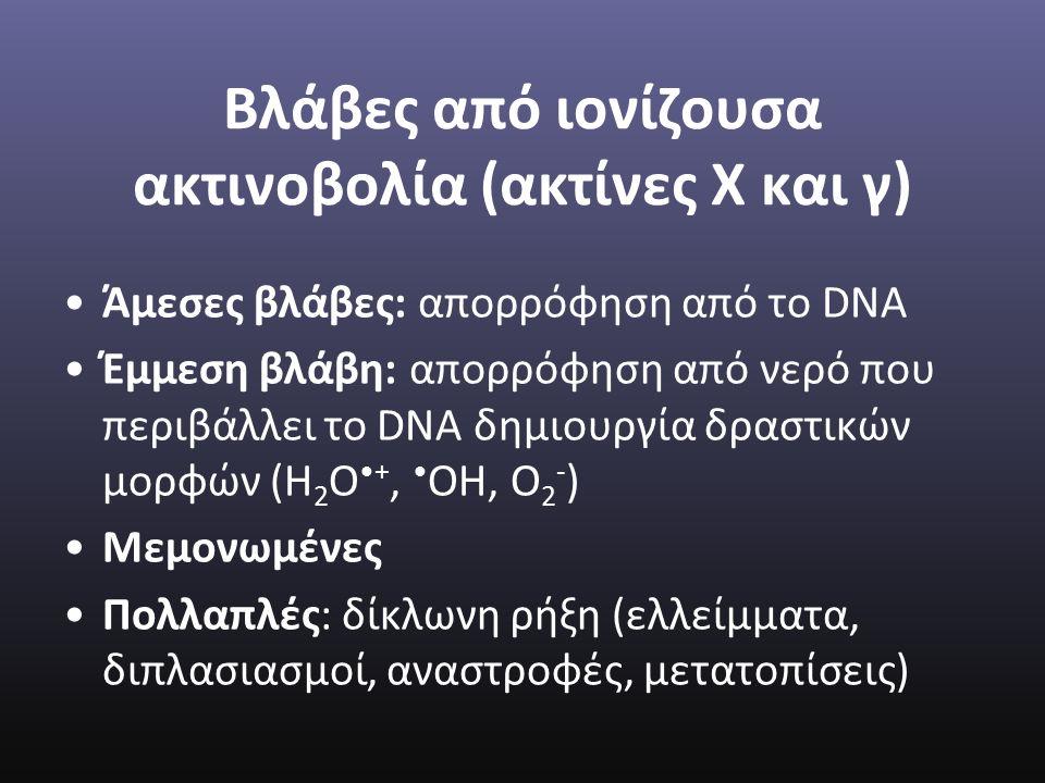 Βλάβες από ιονίζουσα ακτινοβολία (ακτίνες Χ και γ) Άμεσες βλάβες: απορρόφηση από το DNA Έμμεση βλάβη: απορρόφηση από νερό που περιβάλλει το DNA δημιουργία δραστικών μορφών (Η 2 Ο+, ΟΗ, Ο 2 - ) Μεμονωμένες Πολλαπλές: δίκλωνη ρήξη (ελλείμματα, διπλασιασμοί, αναστροφές, μετατοπίσεις)