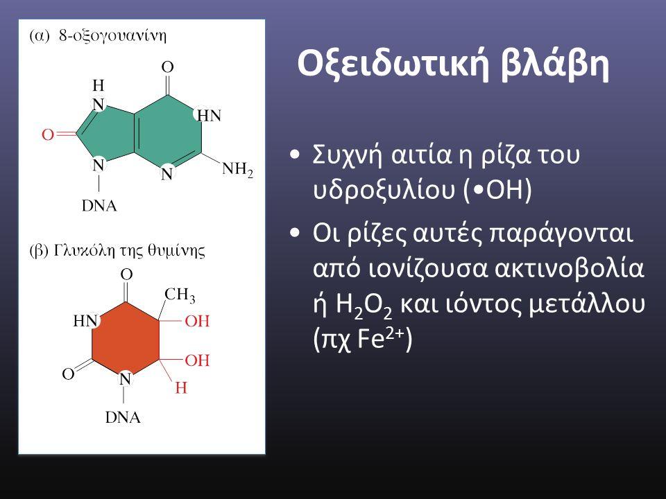 Οξειδωτική βλάβη Συχνή αιτία η ρίζα του υδροξυλίου (ΟΗ) Οι ρίζες αυτές παράγονται από ιονίζουσα ακτινοβολία ή Η 2 Ο 2 και ιόντος μετάλλου (πχ Fe 2+ )