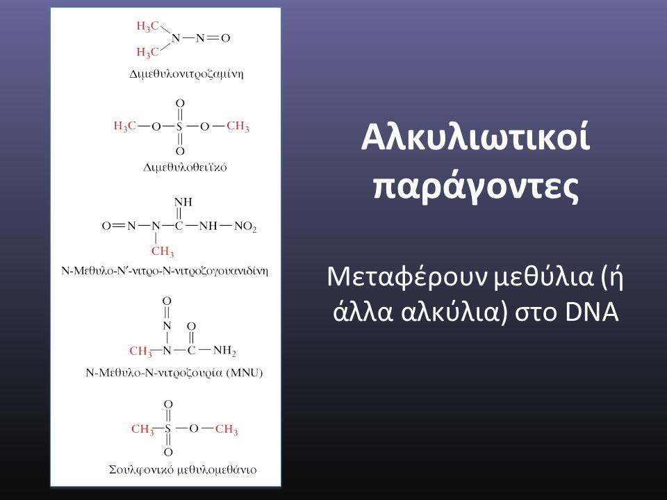Αλκυλιωτικοί παράγοντες Mεταφέρουν μεθύλια (ή άλλα αλκύλια) στο DNA
