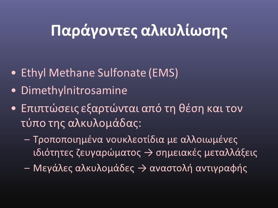 Παράγοντες αλκυλίωσης Ethyl Methane Sulfonate (EMS) Dimethylnitrosamine Επιπτώσεις εξαρτώνται από τη θέση και τον τύπο της αλκυλομάδας: –Τροποποιημένα νουκλεοτίδια με αλλοιωμένες ιδιότητες ζευγαρώματος → σημειακές μεταλλάξεις –Μεγάλες αλκυλομάδες → αναστολή αντιγραφής