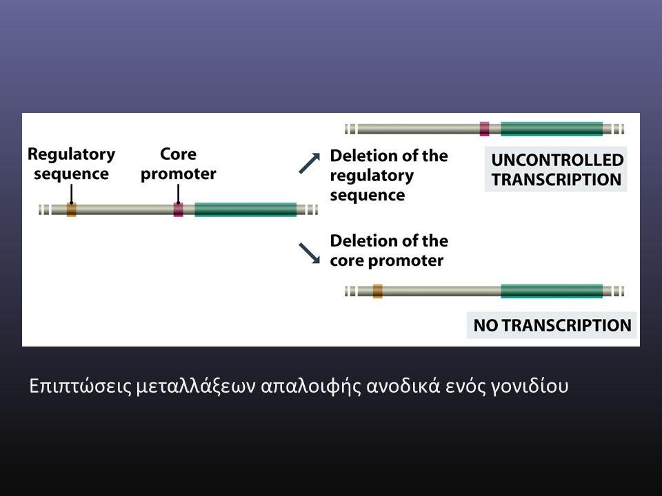 Επιπτώσεις μεταλλάξεων απαλοιφής ανοδικά ενός γονιδίου