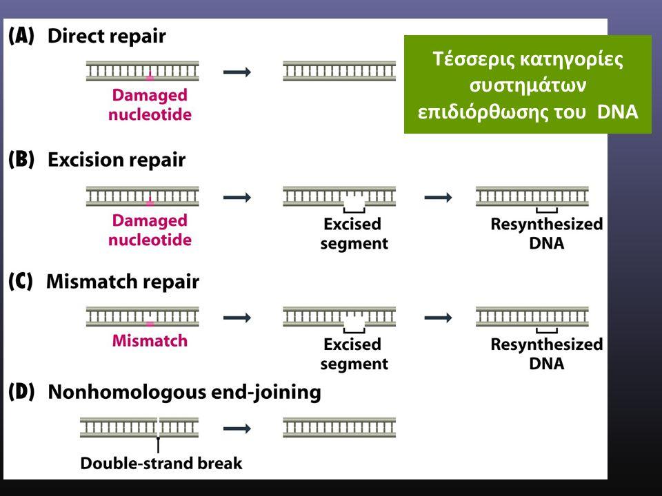 Τέσσερις κατηγορίες συστημάτων επιδιόρθωσης του DNA