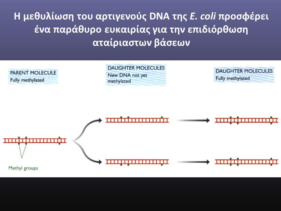 Η μεθυλίωση του αρτιγενούς DNA της E.