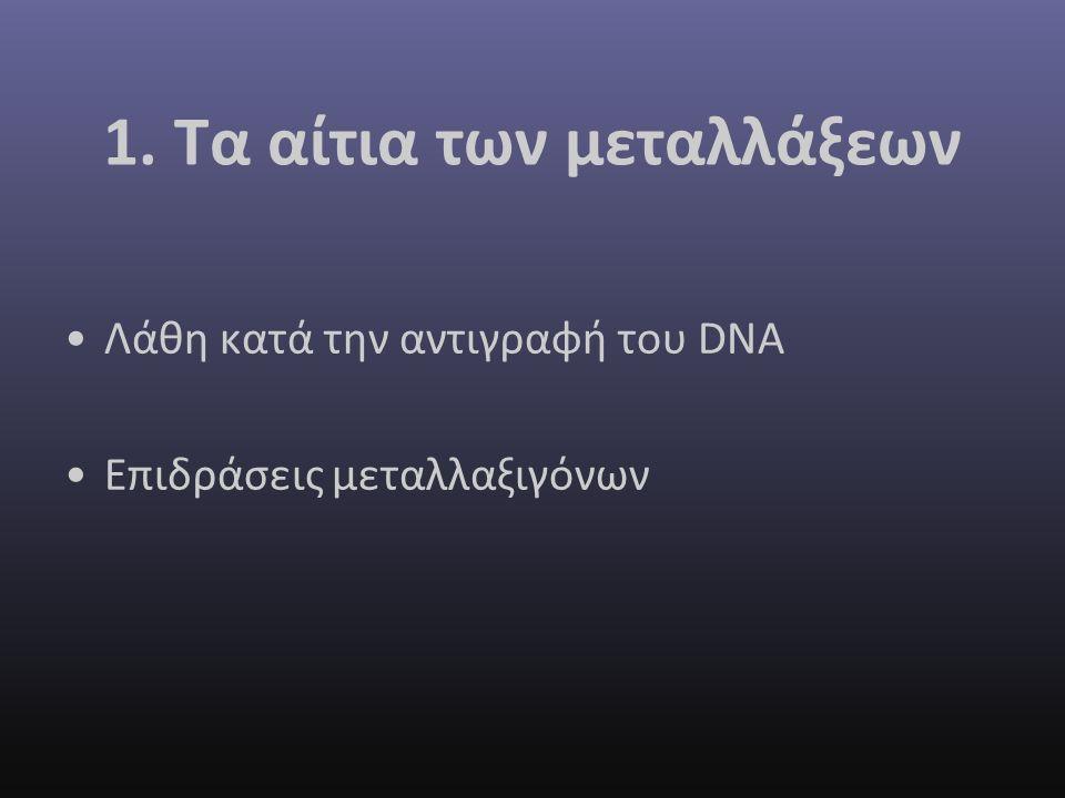 1. Τα αίτια των μεταλλάξεων Λάθη κατά την αντιγραφή του DNA Επιδράσεις μεταλλαξιγόνων
