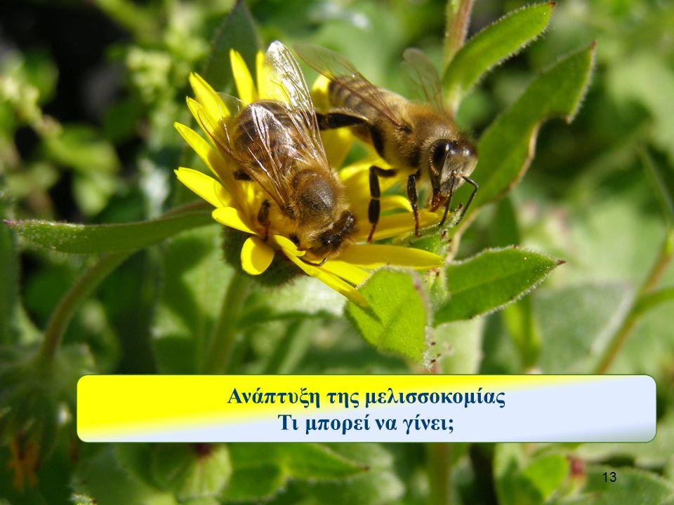 13 Ανάπτυξη της μελισσοκομίας Τι μπορεί να γίνει;
