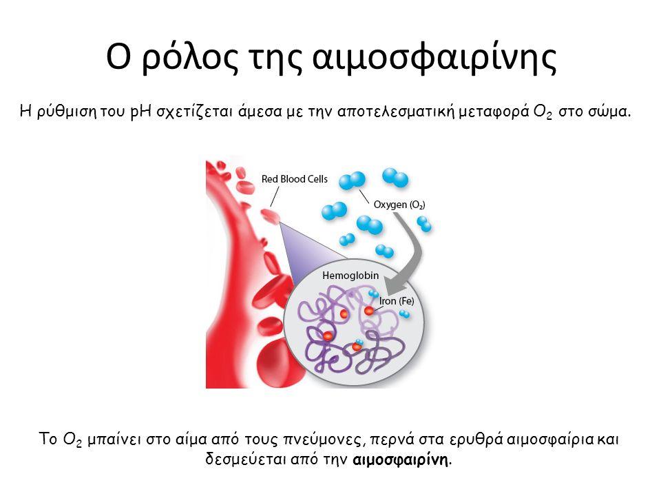Ο ρόλος της αιμοσφαιρίνης Η ρύθμιση του pH σχετίζεται άμεσα με την αποτελεσματική μεταφορά O 2 στο σώμα. Το Ο 2 μπαίνει στο αίμα από τους πνεύμονες, π