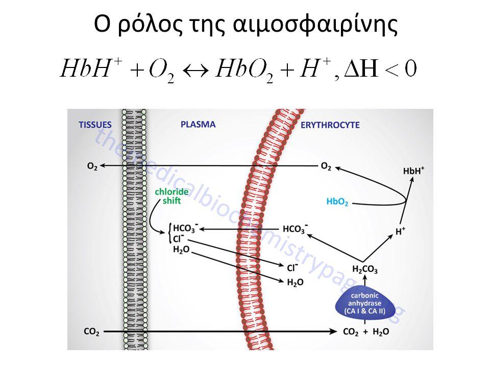 Ο ρόλος της αιμοσφαιρίνης