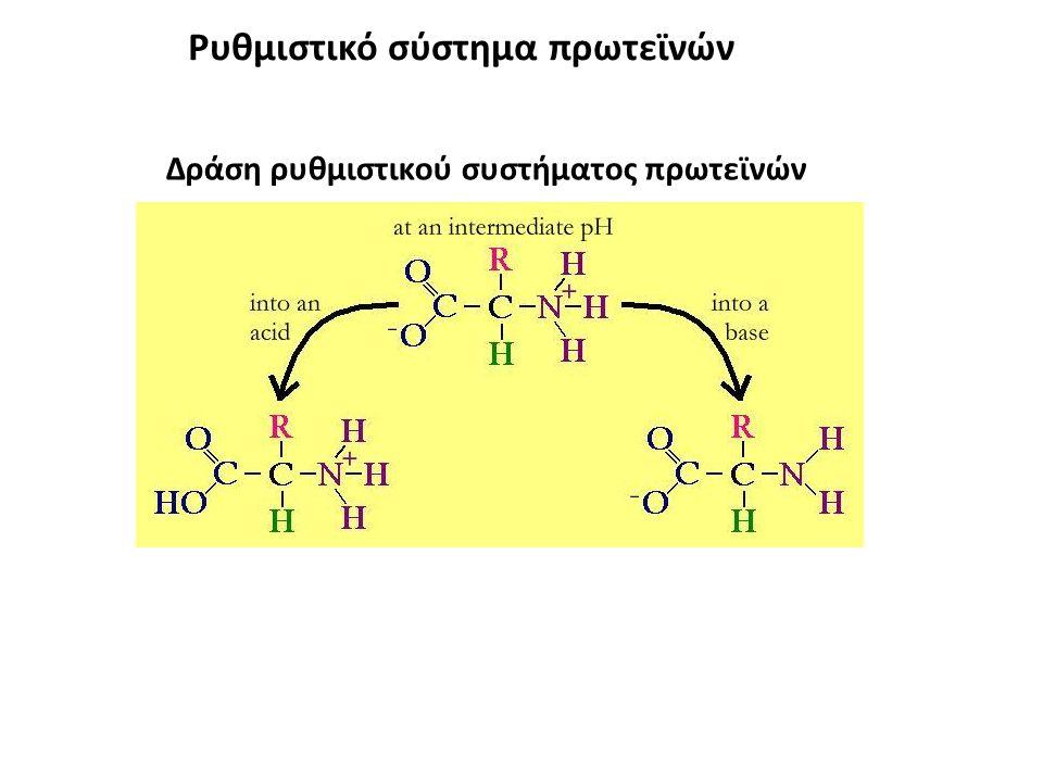 Ρυθμιστικό σύστημα πρωτεϊνών Δράση ρυθμιστικού συστήματος πρωτεϊνών