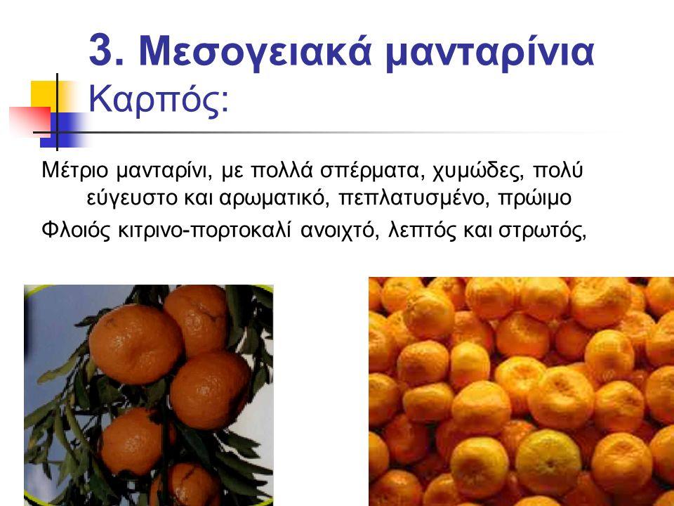 3. Μεσογειακά μανταρίνια Καρπός: Μέτριο μανταρίνι, με πολλά σπέρματα, χυμώδες, πολύ εύγευστο και αρωματικό, πεπλατυσμένο, πρώιμο Φλοιός κιτρινο-πορτοκ