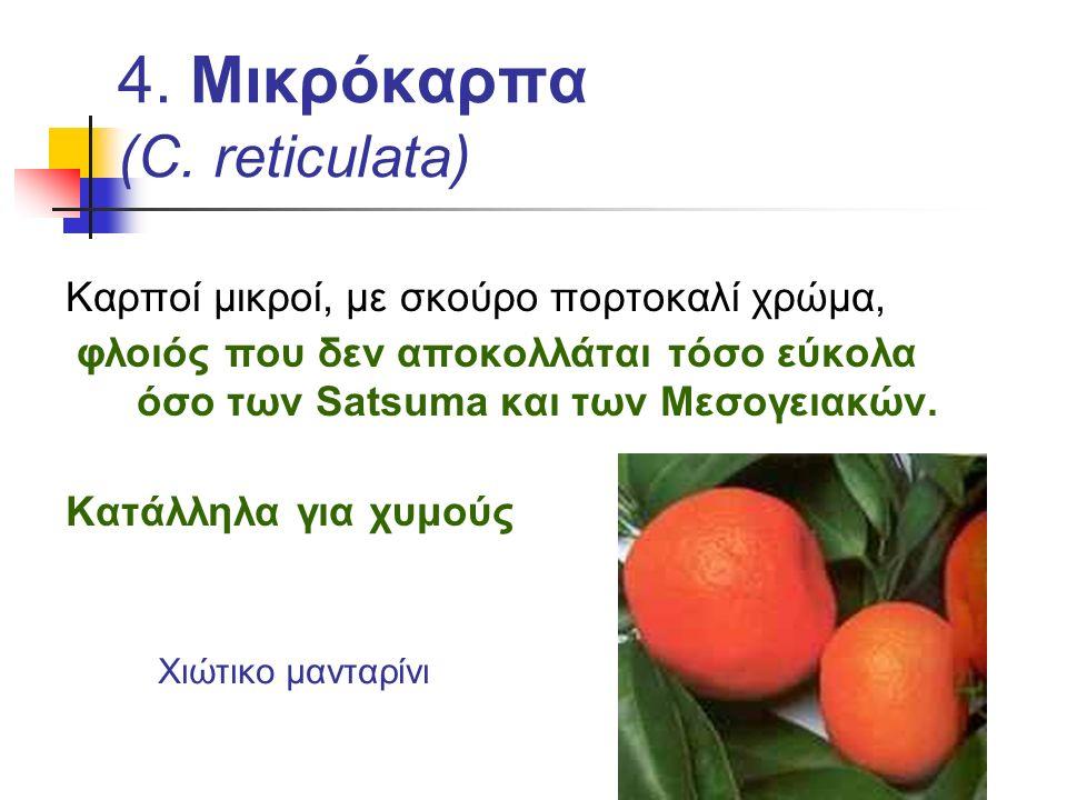 4. Μικρόκαρπα (C. reticulata) Καρποί μικροί, με σκούρο πορτοκαλί χρώμα, φλοιός που δεν αποκολλάται τόσο εύκολα όσο των Satsuma και των Μεσογειακών. Κα