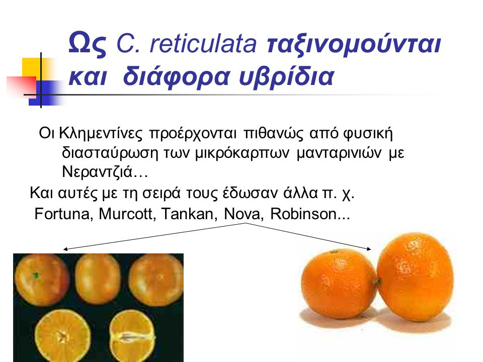 Ως C. reticulata ταξινομούνται και διάφορα υβρίδια Οι Κλημεντίνες προέρχονται πιθανώς από φυσική διασταύρωση των μικρόκαρπων μανταρινιών με Νεραντζιά…