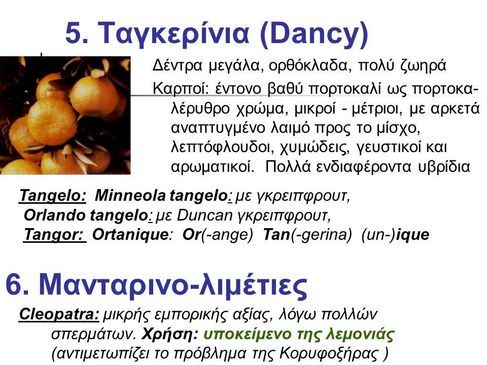5. Ταγκερίνια (Dancy) Δέντρα μεγάλα, ορθόκλαδα, πολύ ζωηρά Καρποί: έντονο βαθύ πορτοκαλί ως πορτοκα- λέρυθρο χρώμα, μικροί - μέτριοι, με αρκετά αναπτυ