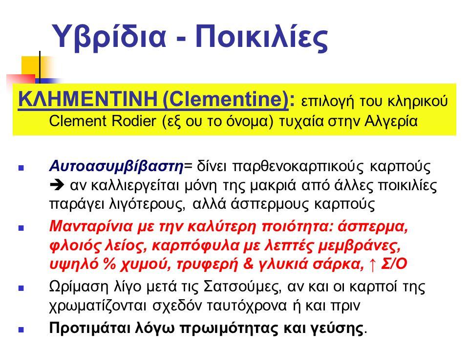 Υβρίδια - Ποικιλίες ΚΛΗΜΕΝΤΙΝΗ (Clementine): επιλογή του κληρικού Clement Rodier (εξ ου το όνομα) τυχαία στην Αλγερία Αυτοασυμβίβαστη= δίνει παρθενοκα