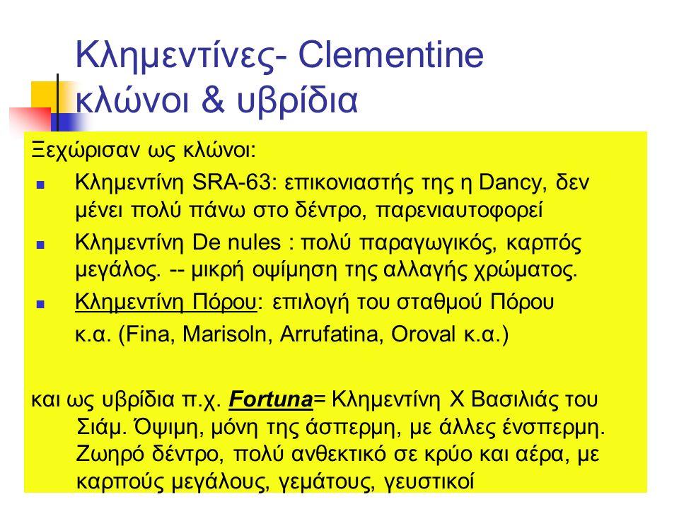 Κλημεντίνες- Clementine κλώνοι & υβρίδια Ξεχώρισαν ως κλώνοι: Κλημεντίνη SRA-63: επικονιαστής της η Dancy, δεν μένει πολύ πάνω στο δέντρο, παρενιαυτοφ